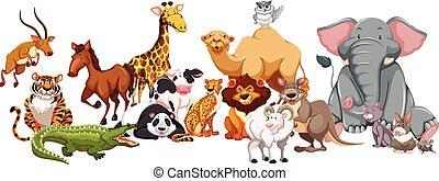 vad, különböző, állatok, fajta