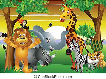 vad, karikatúra, állat, afrikai