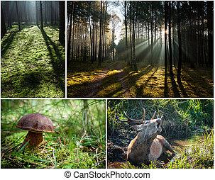 vad, növényvilág, és, fauna, alatt, a, erdő