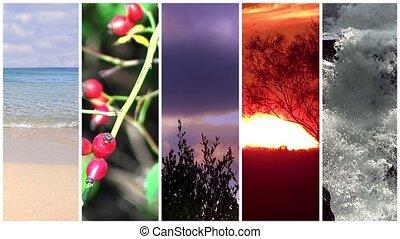 vad, szépség, erő, természet