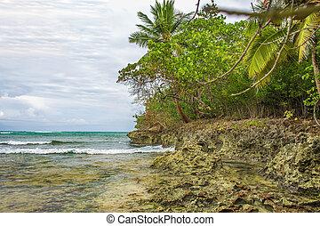 vad, tropikus, shore.