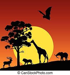 vad, vektor, állat, természet