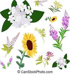 vad virág, állhatatos, rajz