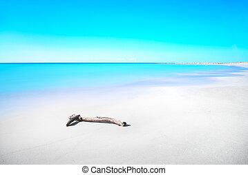 vada, spiaggia., italia, legno, ramo, bianco, livorno
