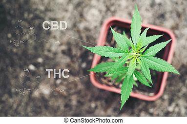 vagem, thc, estrutura, cbd, químico, lin, marijuana