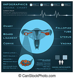 Vagina Infographic Infocharts Health And Medical