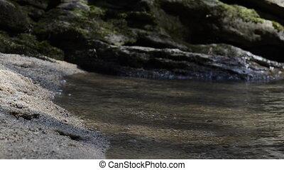 vagues, lapping, ruisseau, panthère