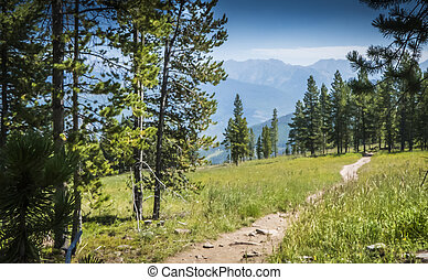 Vail Mountain Hiking Trail - Fireweed Hiking Trail on Vail...