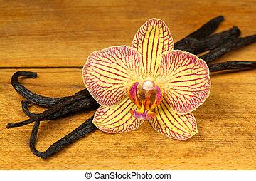 vainilla, vainas, orquídea