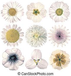 val, Årgång, isolerat, olika,  retro, vit, Blomstrar