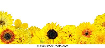val, av, gul blommar, hos, botten, rad, isolerat