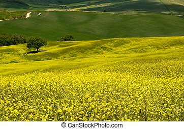 Val d'Orcia (Tuscany)