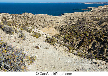 Sandy landscape with shrubs and flowers at Valdes Peninsula in Argentina