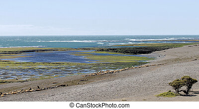 I went to Argentine in 2007. This is Valdes Peninsula.