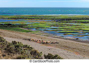 Valdes Peninsula in Argentine