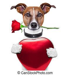 valentin, chien