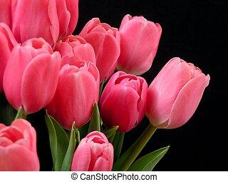 valentin, tulipes