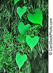 Valentine background with leaf