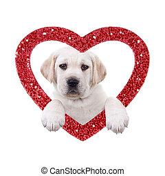 Valentine Dog - Valentine Labrador puppy dog and glitter...