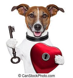 valentine dog , unlock my heart
