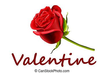 Valentine red rose