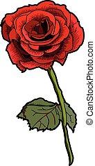 Valentine Rose - A romantic red Valentine rose
