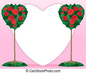 valentine rose bush