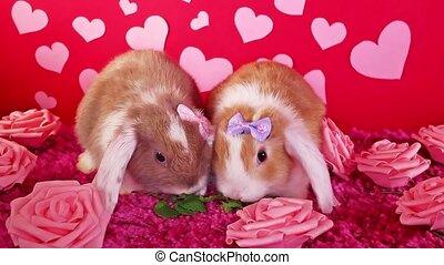 valentine, s, dzień, sprytny, zwierzę, zwierzęta, pieszczoch, pieszczochy, królik, zwisać, list miłosny, pojęcie
