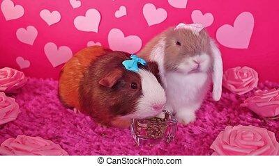 valentine, 's, dzień, zwierzę, pieszczoch, królik, list miłosny, pojęcie