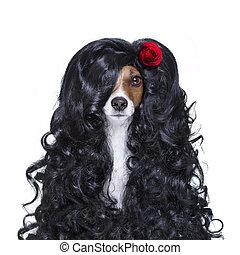 valentines, amoureux, espagnol, lola, chien