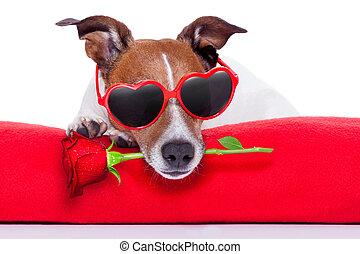 valentines, cane, giorno