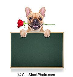 valentines, chien