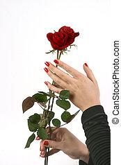 valentine\'s, día