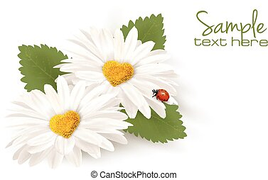 Valentine's Day background. Two daisies with hearts and leaves. Vector.