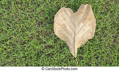 Valentines day background with heart shape of brown leaf on green grass. Love concept.