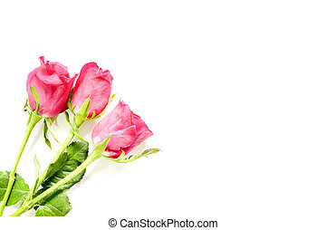 Valentines day background with pink roses with copy space, selective focus.