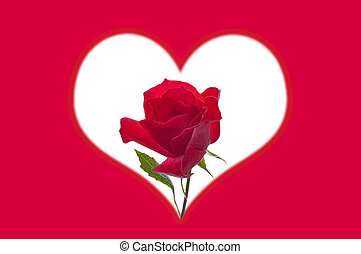 Valentine's Day. Beautiful red bright rose in the center of a white heart on a red background