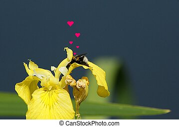 Valentine's Day bee - Valentine's Day nee in a flower