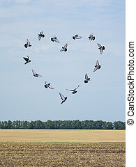 Valentine's day card with heart from flying pigeons