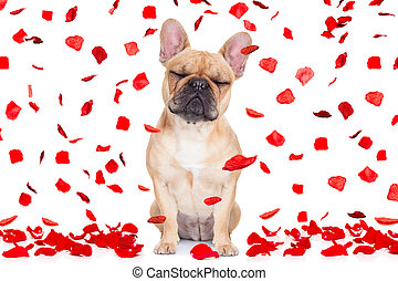 valentines day dog crazy in love