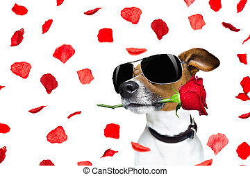 valentines day dog rose in mouth