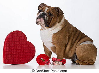 valentines day dog