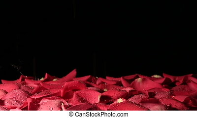 Drops of water falling on background of petals. Slow motion.
