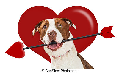 Valentines Day Heart Cupid Dog