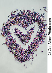 Valentines Day Heart Made of aromatic lavender flowers on a white background