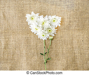Valentines Day Heart Made of white chrysanthemum on canvas background