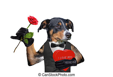 valentines dog with a gift and a rose