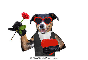 valentines dog with a gift and a rose wearing sunglasses