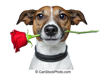 valentines, hund