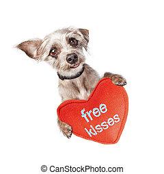 valentines, Megcsókol, kutya, szabad, Nap